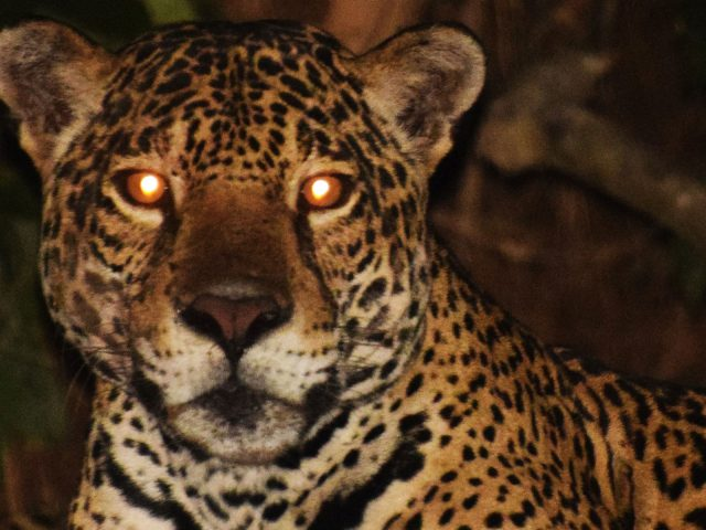 MACHU PICCHU & AMAZON BASIN 8 DAYS WITH INOTAWA LODGE